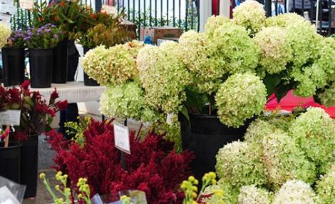 Wollam Gardens Flowers
